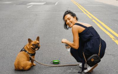 Leer de Franse Bulldog met gevlekte vacht kennen